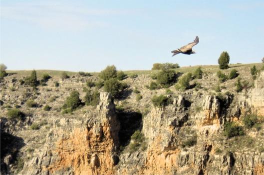 De gieren van het Valle de Duratón