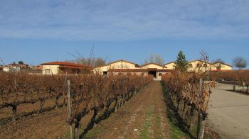 Wijngaard D.O. Ribera del Duero