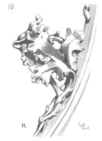 Het distelblad (Cardina)