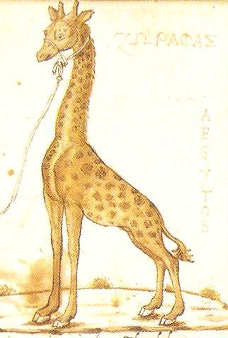 En de giraffe van Cyriacus
