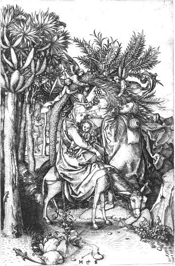 De drakenboom van die Jeroen Bosch gebruikte