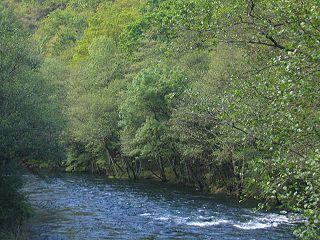 Oeverbos langs de rivier Eume.