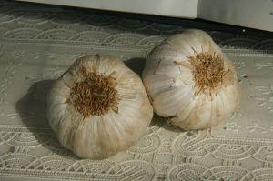 Ook knoflook is een veel gebruikt ingrediënt in de Spaanse keuken.