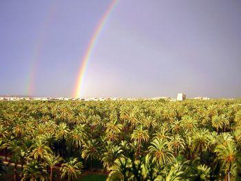 De palmtuinen van Elche.