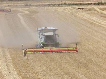 Het verbouwen van graan is zeer belangrijk in deze Gemeenschap.