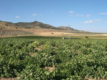 Wijngaard in Ciudad Real.