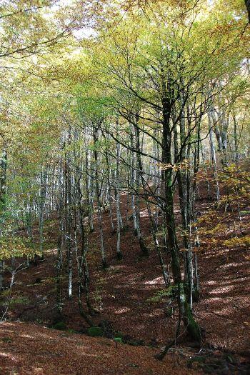 De bossen van Irati.