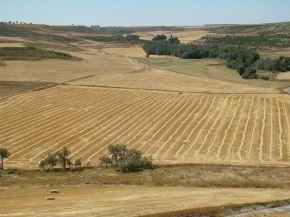 Foto van graanakkers in de provincie Valladolid.