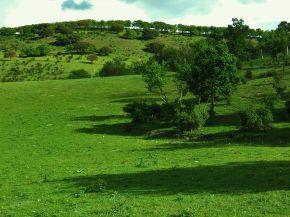 Foto platteland van Tudela de Deuro.